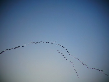 50鳥達.JPG